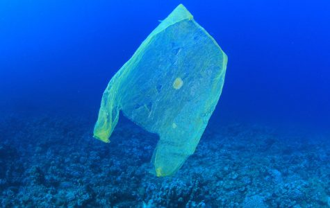 Plastic Bags: The Convenient Killers