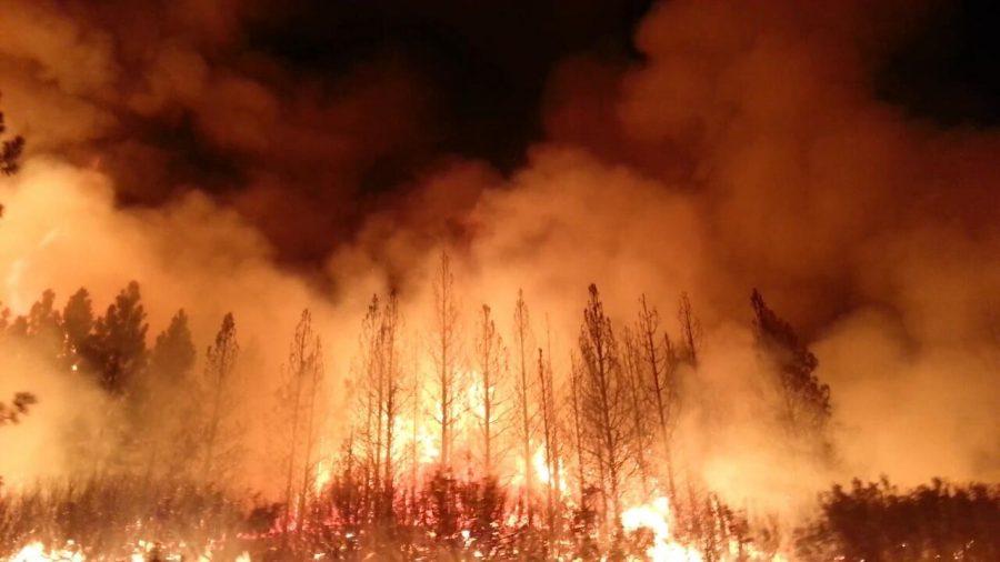 Australia+bushfires+ravage+the+environment.