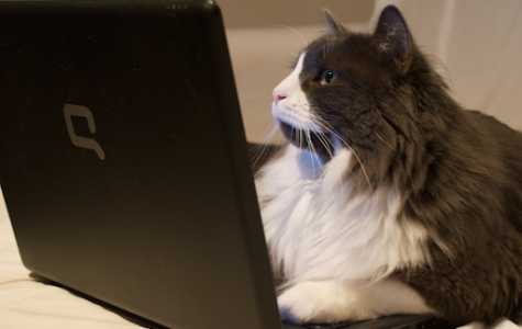 How Online Learning Affects Grades